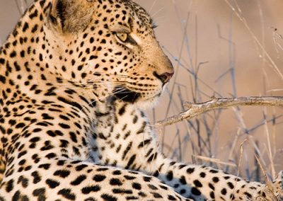 Exceptional leopard encounter at the Kruger National Park