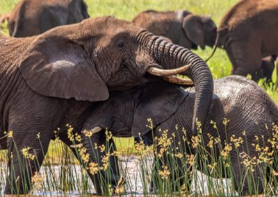 Unique Elephant Sightings in the Pongola Game Reserve