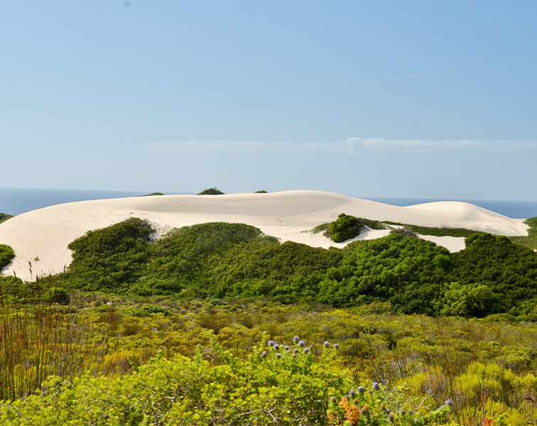 Coastal landscapes of De Hoop Nature Reserve